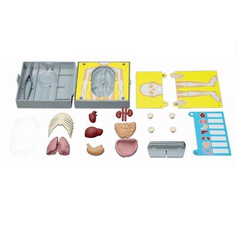 STEM-набор 4М Строение тела 00-03373 Превью 2